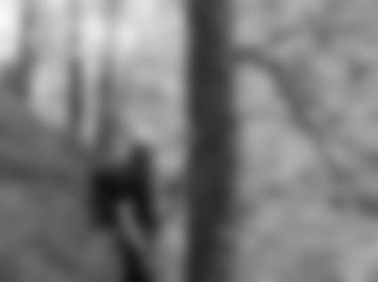 Seile im Wald