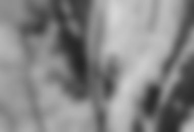 """Benedikt Purner in der ersten Seilllänge von """"Gorillas im Nebel""""; Foto: Klaus Kranebitter"""
