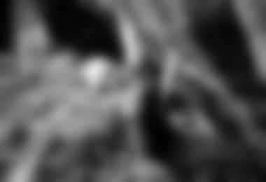 kilian fischuber bouldering veccio leone, foto: reinhard richtinger