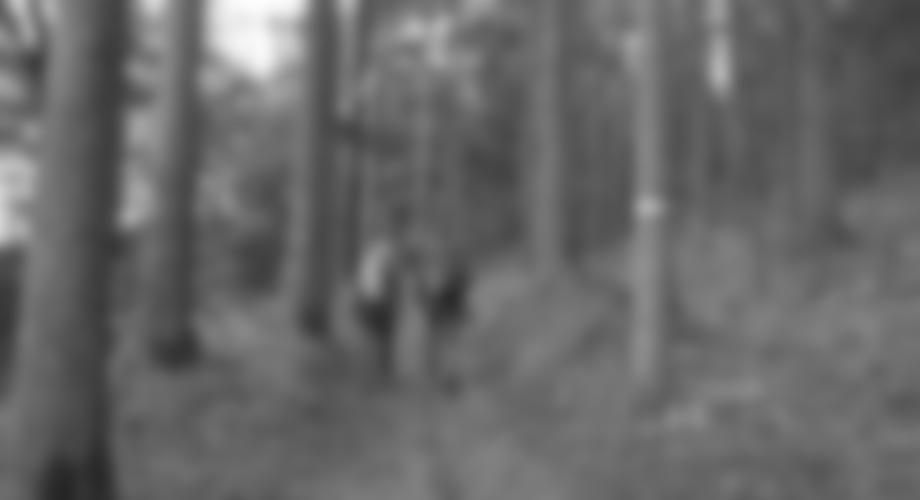 Zustieg durch den Laubwald