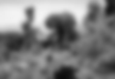 """In den unteren Regionen. Die """"Kilimanjari Senecia"""" Pflanze im Hintergrund."""